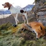 Haill&Knall TV: Revejakt med hund 2