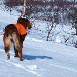 Sarafjellets Fit For Fight del 3. VK hoinnen