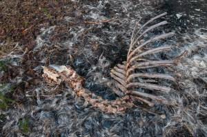 Wolf Kill near Tsirku River-2