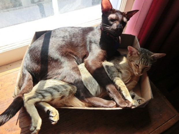 cats in box 2