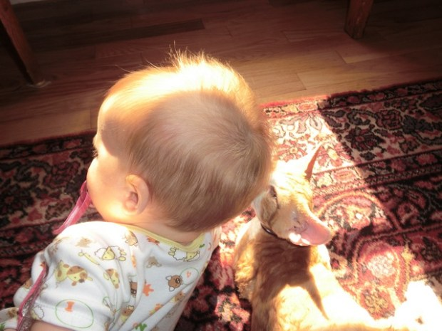 sometimes good sunbeam companions