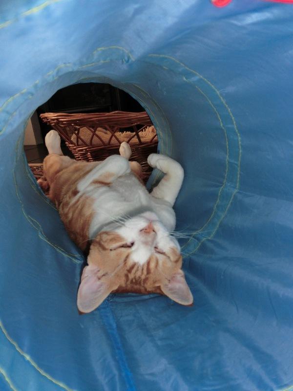 strangest-sleeping-position-part-2