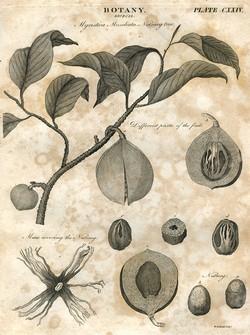 Sains Botani