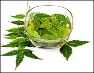 neem-leaves-fight-hair-loss