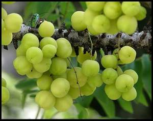 health-benefits-of-gooseberry