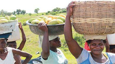 haiti banner image