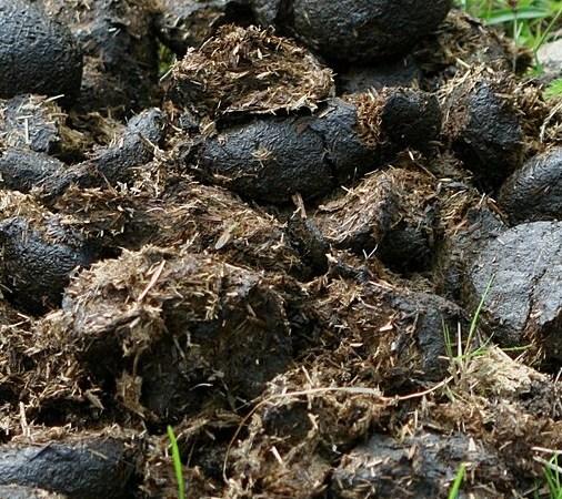 28% de la population haïtienne défèquent à même le sol