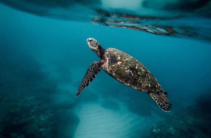 Drame à Madagascar : 19 personnes mortes après consommation de la viande de tortue de mer