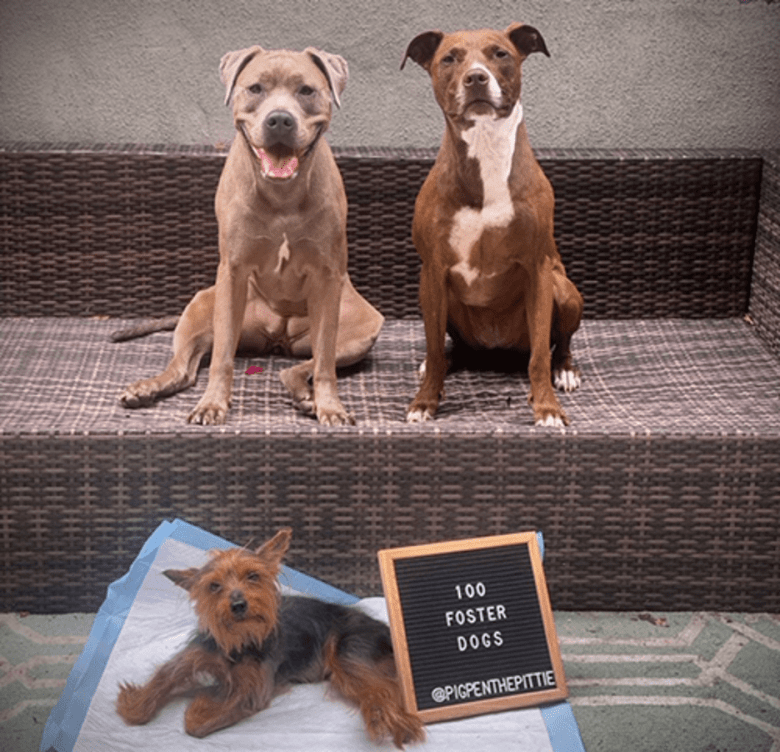Shelter dogs adopted, fostered in Brooklyn