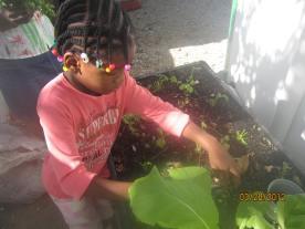 cutting parsley IMG_4796