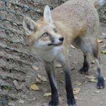 Parc animalier Argeles-G.