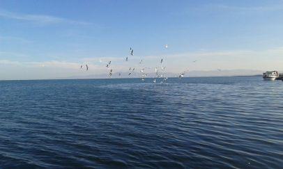vogels 🐦
