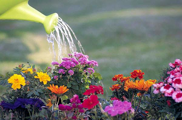 Bitkiler oruç tutmaz