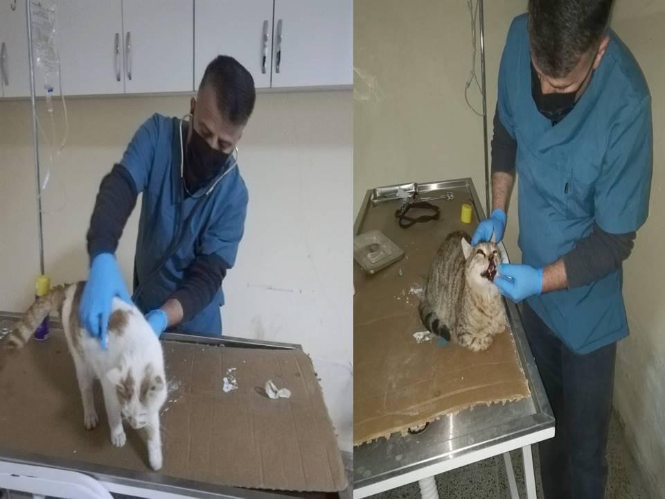 Yaralı ve hasta kediler tedavi altına alındı