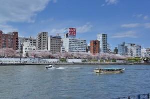 春の隅田川 上り下りの観光客