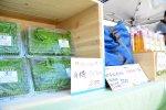 函館蔦屋書店はこだてひまわり夏まつり