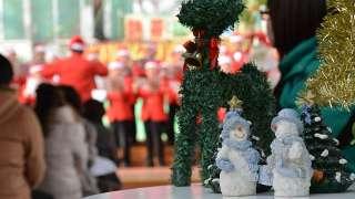 函館市熱帯植物園 第10回クリスマスコンサート レビュー