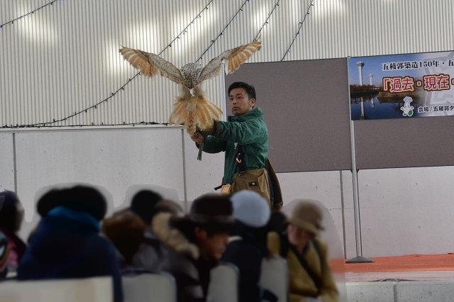 猛禽フライトショー
