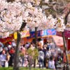 【2018/4/28~5/13】函館公園の露店と五稜郭公園の花見電飾