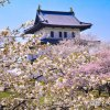 【2018/4/28~5/13】第71回松前さくらまつり(松前町)