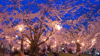 【2019年版】函館と周辺の定番&穴場お花見スポットまとめ