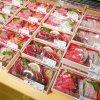 【2020/7/29~8/7】はこだて海鮮市場「夏祭」