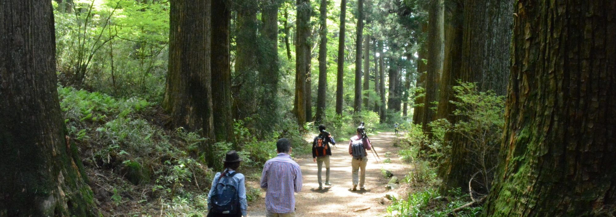 Day return from Tokyo guided heritage hiking tour