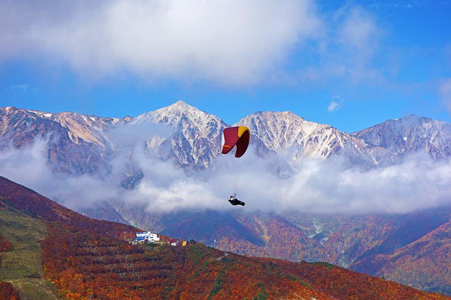 紅葉の白馬八方尾根で飛ぶパラグライダー