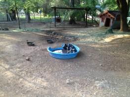 Maybelline enjoying her pool