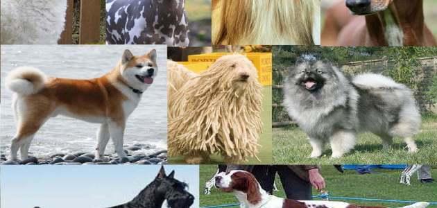 ما هي أنواع سلالات الكلاب