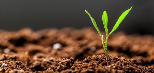 تعريف الزراعة..النشاط الاقتصادي الذي يمد أرواحنا بالحياة