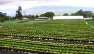 الزراعة في دولة الإمارات..خطط فعالة لتحقيق الإكتفاء الذاتي