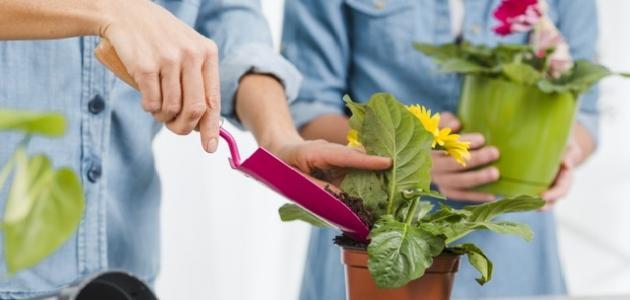طرق الزراعة المنزلية .. و ماهي متطلبات الزراعة المنزلية