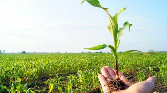 الوسائل المستخدمة في الفلاحة البيولوجية..طريقة مثالية لتحسين التربة والإنتاج
