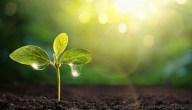 خصوبة التربة..أثرها على الإنتاج الزراعي وأهم الطرق لزيادة خصوبة التربة