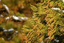 スギ花粉の時期とヒノキ花粉との違い