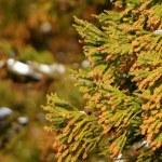 スギ花粉の時期はいつまで?ヒノキ花粉との違いや自宅でできる対策
