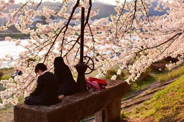 角館桜まつりの開花時期
