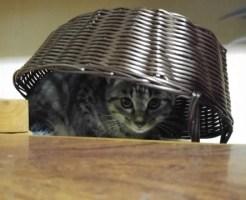 地震 猫 逃げた