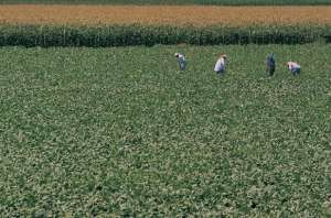 agribusiness_crops