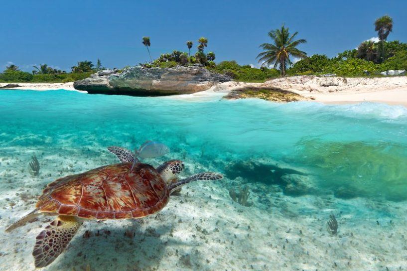 turtle-in-mexico