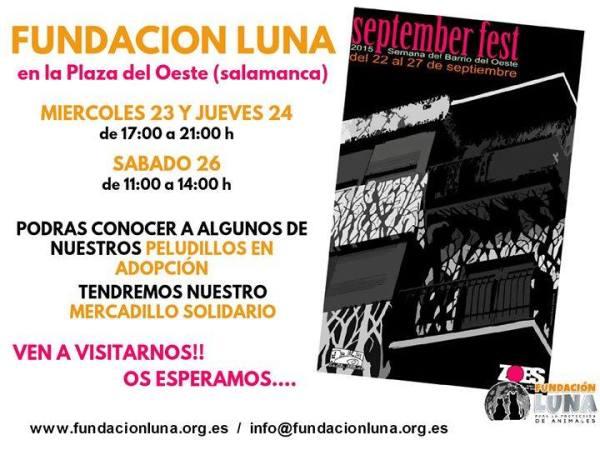 Mercadillo Solidario de la Fundación Luna