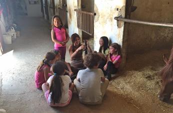 Lo aprenden todo sobre el cuidado de los caballos