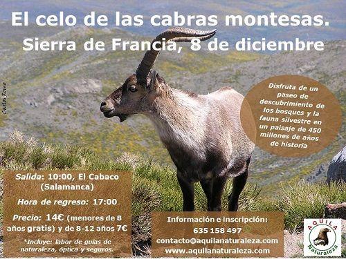 Paseo de descubrimiento por la Sierra de Francia para descubrir el celo de las cabras montesas