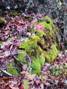 La naturaleza y su riqueza en colores