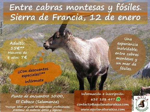 Entre cabras montesas y fósiles con Aquila en la Sierra de Francia
