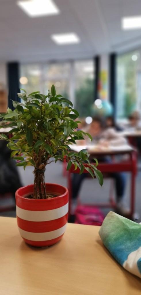 Tabletschule im Aufbau #12: Digitaler Blumendienst 1