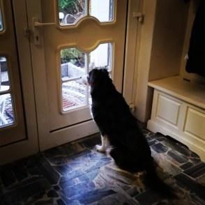 Hund wartet vor Eingangstür
