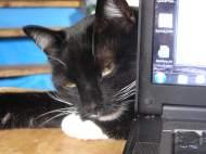 puss-behind-computer