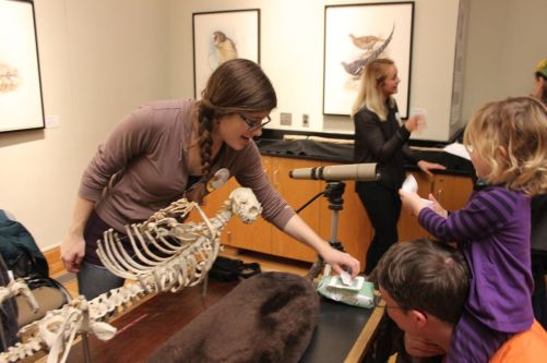 Meet the Mammals, 2015 at the Burke Museum